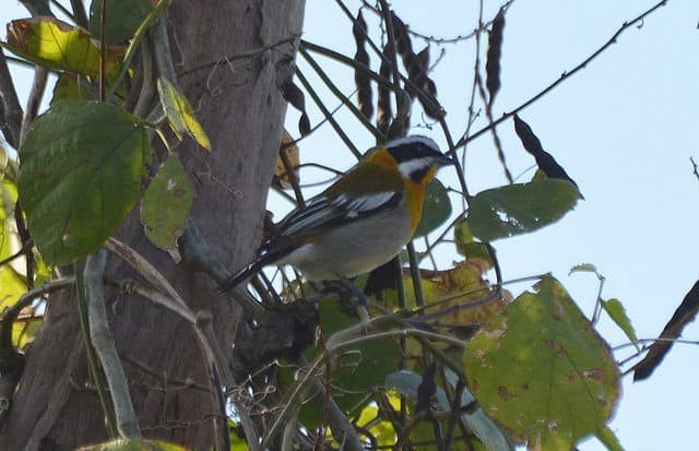 2015 Bird Survey for Ebird