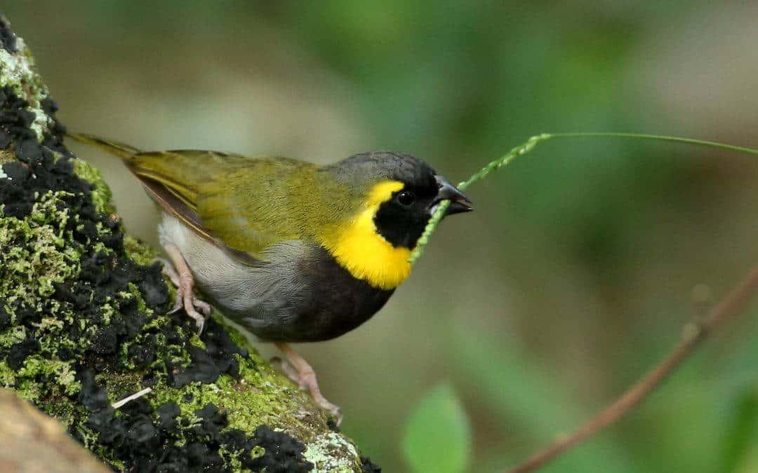 Cuba Bird Survey – December 2016