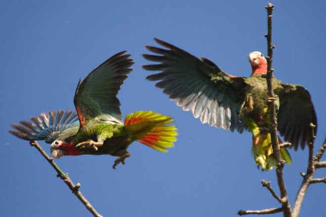 Cuba Bird Survey