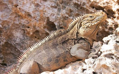 Cuba Herpetology & Natural History 2018